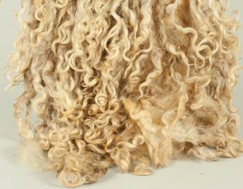 Wensleydale fleece & lokcs